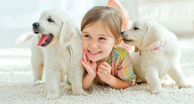 Людина приручила собаку багато тисяч років тому, і з тих пір тварина є нашим вірним другом і супутником.