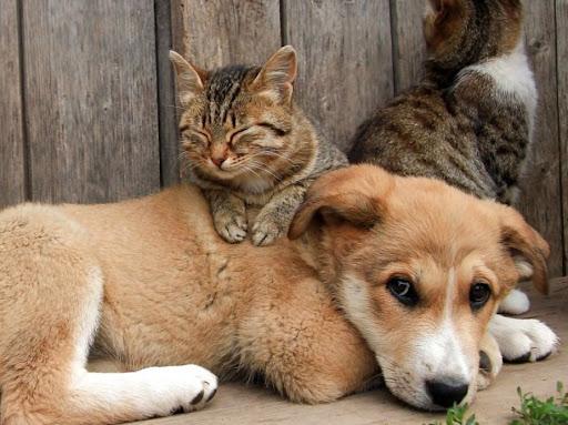 Домашні тварини та навчання