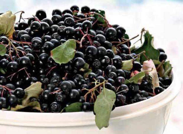 Люблінський медичний університет виявив новий суперпродукт і цінне джерело антиоксидантів - ягоди аронії, передає