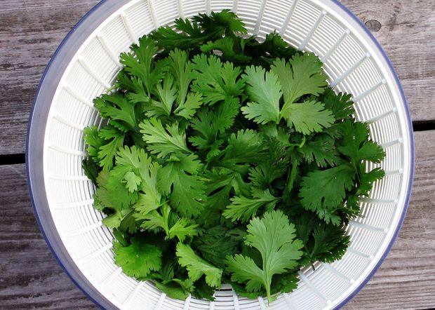 Не всім смакує кавказька трава - кінза, але вона дуже корисна для здоров'я і тіла.