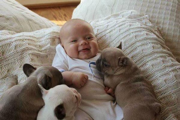 Днями в соцмережі з'явилось відео зі щеням на ім'я Чарлі, яке дбайливо носить іграшки новонародженій дівчинці.Авторка відео, мама маленької крихітки,