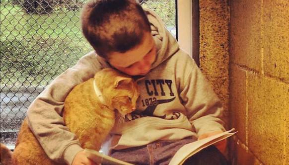 Притулок для тварин округу Беркс в американському штаті Пенсільванія довів, що читання кішкам - це не просто забава.