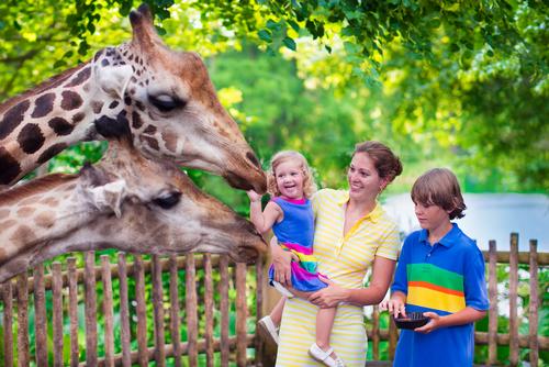 0274_zoopark.jpg (297.27 Kb)