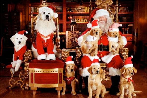 Неповторна історія про чарівну Різдвяну Бурульку, що напередодні Різдва починає танути, і про те, як відважні цуценята, які вміють говорити, будуть ро
