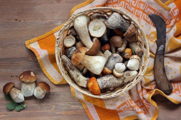 Американські дослідники оцінили вплив грибів на імунну систему.
