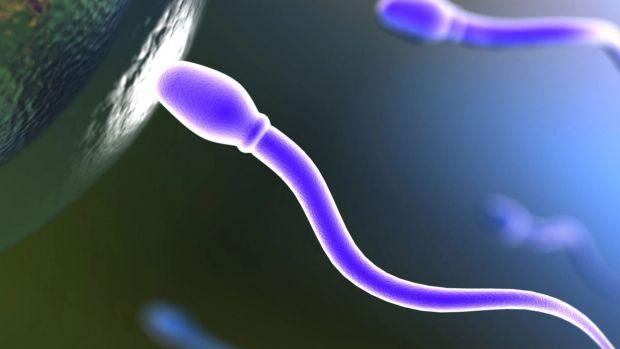 Дослідники, провівши ряд експериментів, дійшли висновку, що під впливом ментолу чоловічі клітини втрачають бойові навички і не можуть пробити захисний