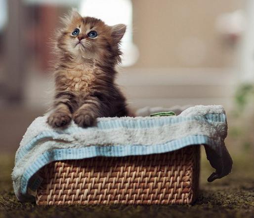 Для тих, хто хоче придбати дітям кота.Від покупки кошеняти нас часто відводить страх, що разом з пухнастою грудочкою ми принесемо в будинок глисти, ли