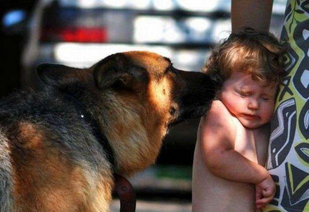 Як допомогти дитині впоратися зі страхом до собак - читайте далі.