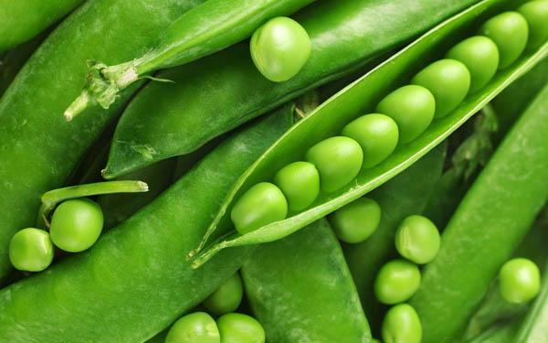 Зелена квасоля, як і всі бобові, - уродженка Південної Америки. Спочатку її не визнавали і вирощували як декоративну рослину, але потім розсмакували і
