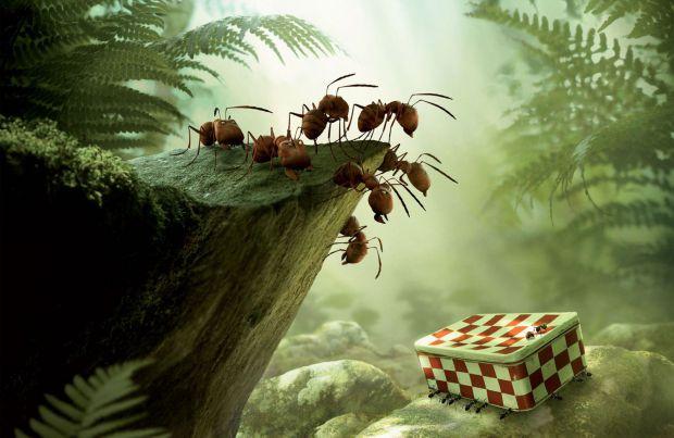Активні і допитливі чорні мурашки виявляють кинуту після пікніка коробку з цукром. Дружний загін разом з Божою корівкою вирішують переправити ласощі в