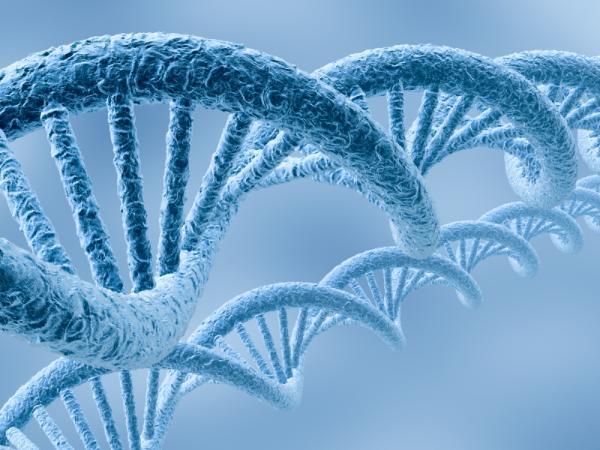 Фахівцям вдалося дійти до висновку, що кава і пиво змінюють ділянку ДНК, напряму пов'язану із раковими пухлинами і старінням.