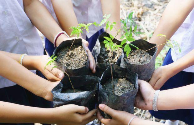 З кожним роком все більш актуальним стає питання екологічного виховання. Важливо, щоб у дитини була любов до природи, яку вона підкріплює турботою про