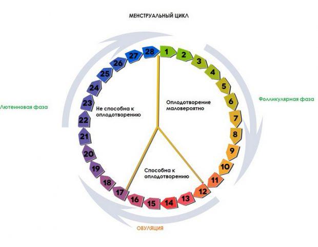 Овуляция - это один из элементов менструального цикла. Овуляция означает готовность яйцеклетки к оплодотворению, которая в подавляющем большинстве мле