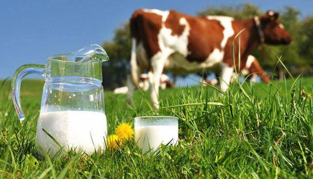 В ході ряду експериментів науковці відкрили нові властивості коров'ячого молока, які дуже добре впливають на організм людини.