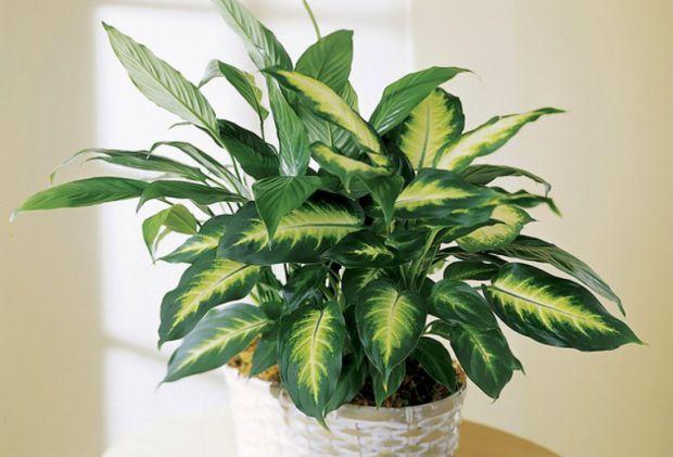 Впевніться, що цих рослин немає у вашій оселі, повідомляє сайт Наша мама.
