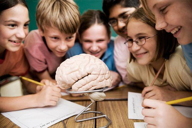 Зарубіжні психологи розкрили процес роботи пам'яті у дітей і підлітків.