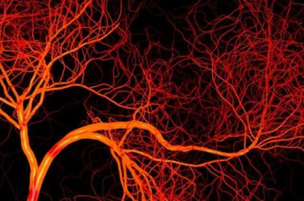 Канадські вчені повідомляють про прорив у вирощуванні штучних кровоносних судин.