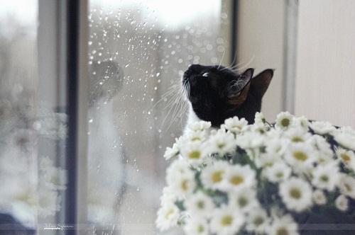 2665_cat-rain-rainy-day.jpg (54.23 Kb)