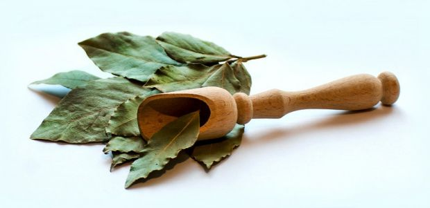 Лавровий лист давно застосовується в традиційних стравах багатьох народів, тому що це ароматична спеція.