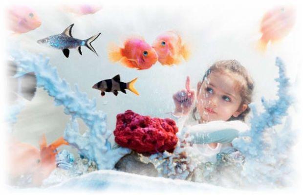 Рибки в акваріумі - це не просто яскрава прикраса кімнати. Це живі істоти, за якими потрібно доглядати, годувати, дивитися за чистотою їх середовища п