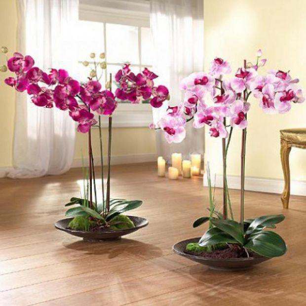 Якщо вам цікаво, як правильно доглядати за домашніми орхідеями - читайте наш матеріал.