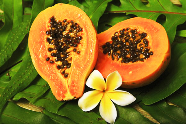 3251_papaya.jpg (240.71 Kb)