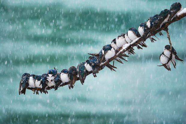 3253655-r3l8t8d-650-animals-in-winter-3.jpg