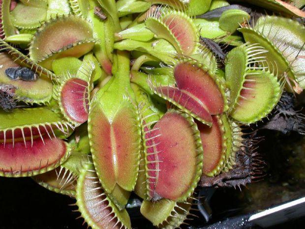 Добірка небезпечних рослин. Деякі з цих рослин можуть навіть завдати шкоди не тільки здоров'ю, а вбити людину.