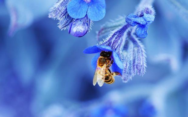 Якщо вас ужалила бджола, щонайшвидше акуратно вийміть жало за допомоги пінцета або голки. Якщо їх нема напохваті, жало можна спробувати видалити чисти