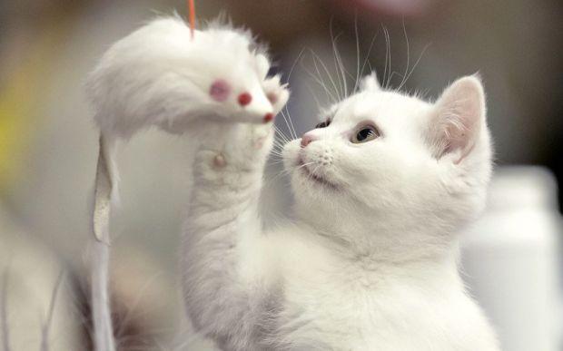 Тваринки та їх іграшкиДомашні улюбленці - вони, як діти, не мислять свого життя без іграшок.
