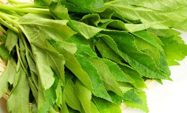 Мікробіологи виявили цілющі і омолоджуючі властивості однієї рослини, яка росте в Японії.