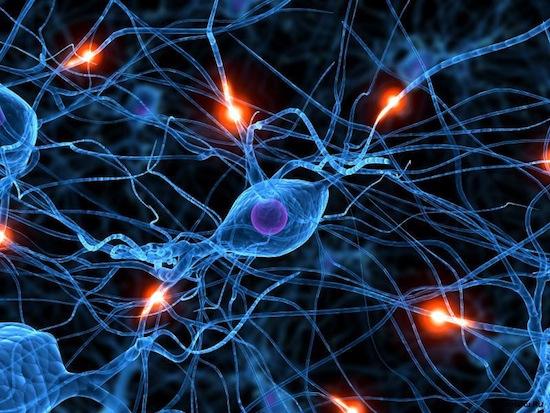 Науковці з Каліфорнії провели низку експериментів, в ході яких виявили ген, відповідальний за розвиток інтелекту.