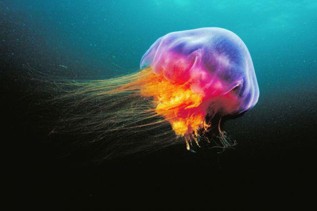 Правила першої допомоги у випадку вжалення медузи повідомляє сайт Наша мама.