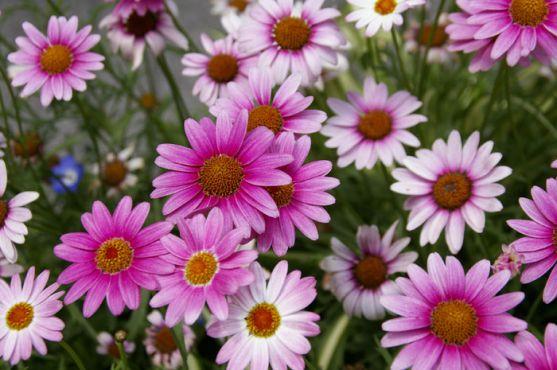 Ось уже протягом багатьох років квіти є невід'ємною частиною кожного свята - днів народження, іменин, весіль та інших урочистих заходів. Але найкращі