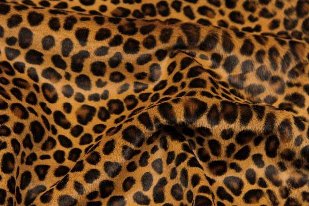 4718_leopard.jpg (65 Kb)
