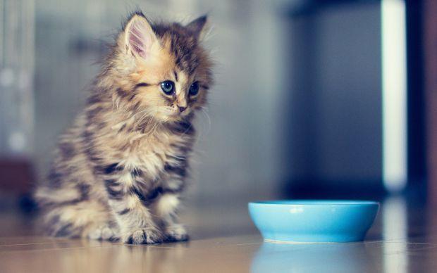 Почуття голоду вважається негативним поняттям і асоціюється з недоїданням. Однак останні дослідження показують, що відчувати почуття голоду вкрай важл