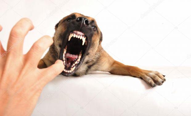 Сьогодні, дуже часто на шляху трапляються небезпечні собаки, які можуть покусати, варто знати, як обробити рану в домашніх умовах.