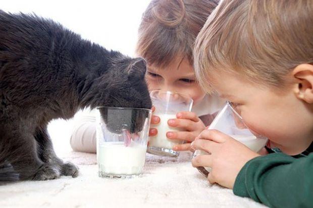 Коров'яче молоко містить речовини, що знижують концентрацію інсуліну в крові між прийомами їжі. А це, в свою чергу, знижує ризик розвитку таких патоло