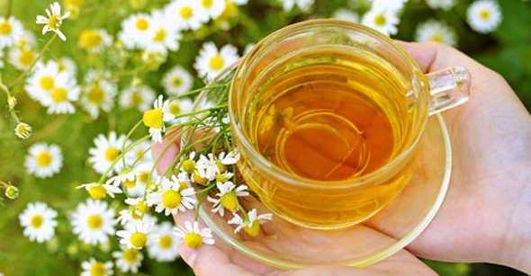 Зелений чай - чудовий напій, який є хорошим антиоксидантом, бореться із зайвою вагою, продовжує життя та збільшує продуктивність мозкової діяльності.Я