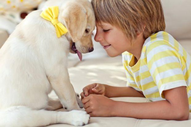 Маленькі діти, в сім'ях яких є собаки, мають більше щастя як в соціальному, так і в емоційному плані. Такі результати дослідження озвучили австралійсь