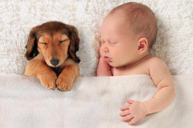 Якщо у вас є домашній улюбленець і зараз ви перебуваєте в очікуванні народження вашого малюка, тоді вам необхідно прочитати нашу статтю.
