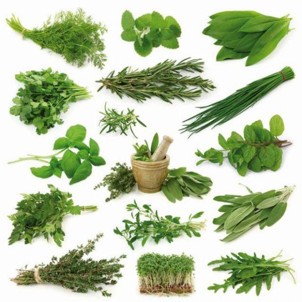 Декілька варіантів, як можна використати зелень: приготувати з нею смачні страви, соуси або прикрасити десерти.