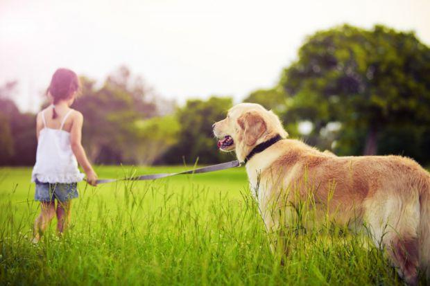 Боїтеся того, як між собою будуть контактувати пес і малюк?