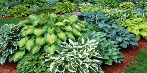 Многолетними растениями являются те, которые цветут и живут более двух лет.