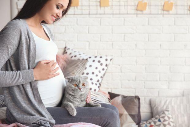 Якщо у вас є домашній улюбленець, звісно, ви не виженете його на вулицю лише тому, що ви - вагітна. Але обмежити з ним контакт потрібно. Сьогодні ми п