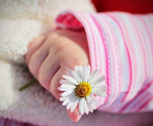 6679_flower-in-baby-hand.jpg (226.53 Kb)
