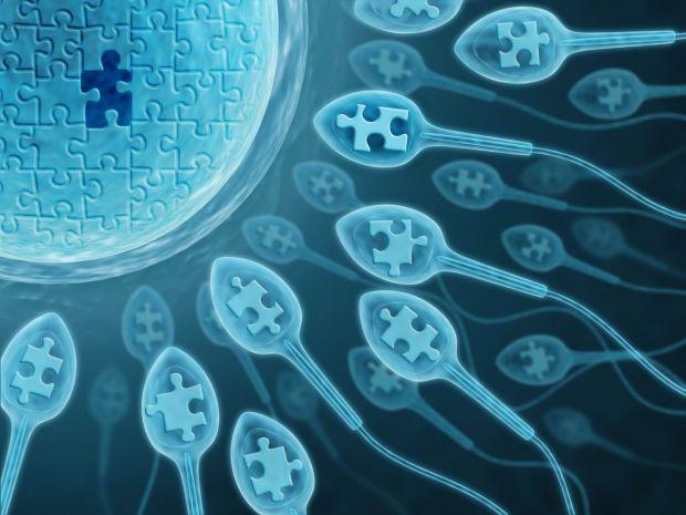 Вчені Корнельського університету зімітували в лабораторних умовах стриктури жіночої репродуктивної системи, щоб простежити поведінку сперматозоїдів.