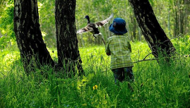 Батьки мають пояснити дитині, що самій в ліс не варто ходити, бо можна загубитися і загинути там.