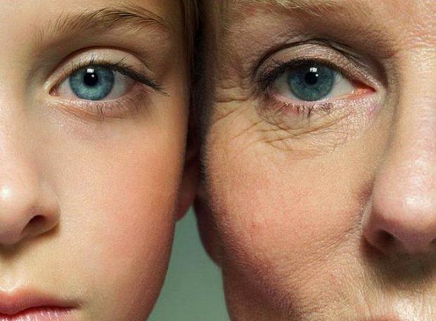 Індійські вчені з'ясували, що специфічні білки в мітохондріях, звані сиртуїн (SIR), сприяють уповільненню старіння. Препринт дослідження опублікований