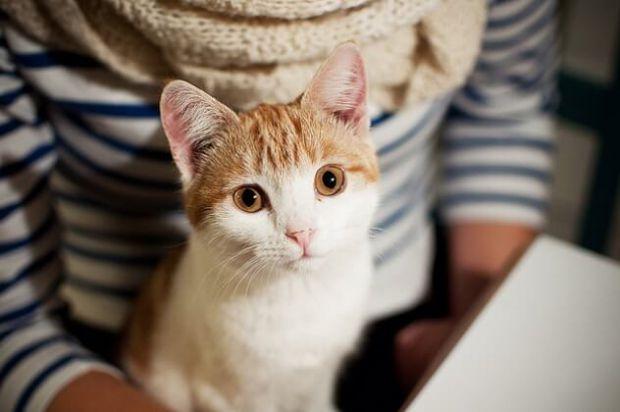 Чи несе небезпеку кішка для вагітних? І яка ймовірність заразиться токсоплазмозом? На ці запитання відповідає доктор Комаровський.